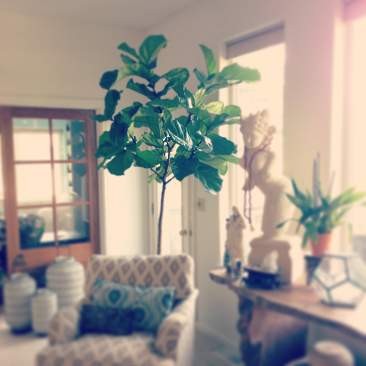 Fiddle Fig Tree. AnahataKatkin