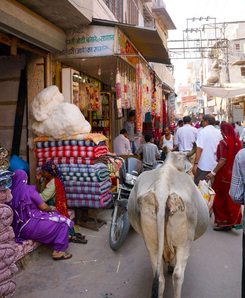 Old city jodhpur cow anahata katkin