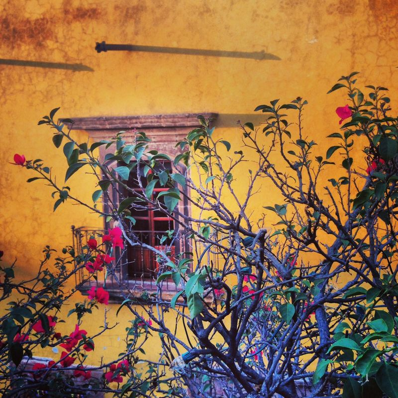 San Miguel Mexico, anahata katkin
