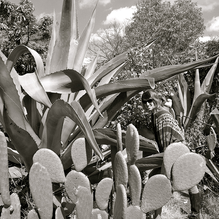 Flora in the maguey plants