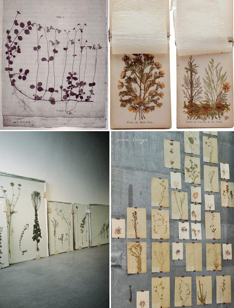 Pressed Flowers- Anahata Katkin Blog