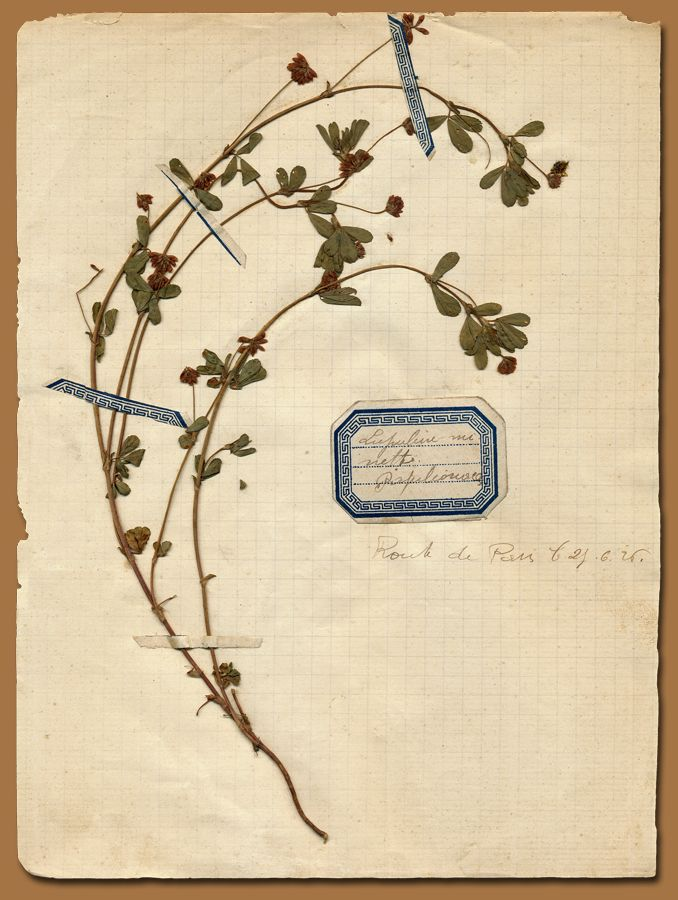Pressed Flower archive- Anahata Katkin Blog