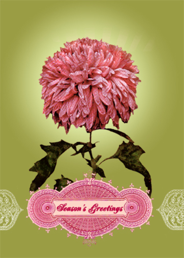 Chrysanthemum_christmas