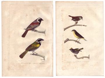 Birds_copy